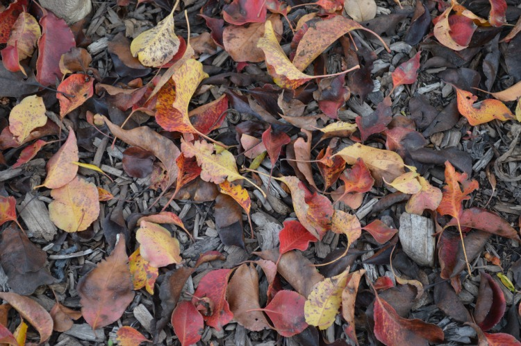 Unretouched fall leaves on ground