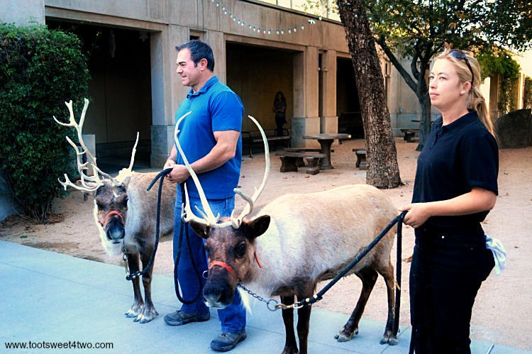 Reindeer at the Center for the Arts, Escondido, CA