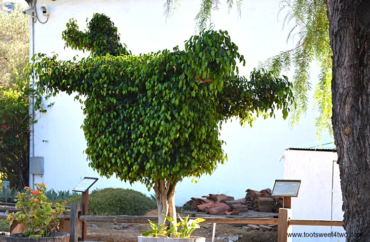 Back view of Dodo Bird Topiary at Mission San Diego de Alcala