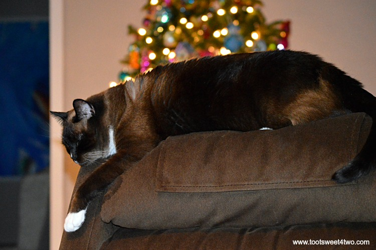 Coco, suffering from post holiday blues, on recliner with Xmas tree in background