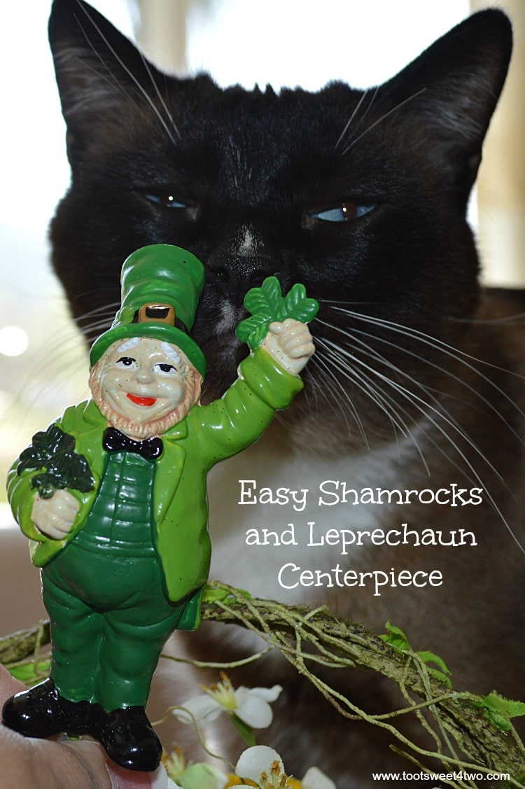 Easy Shamrocks and Leprechaun Centerpiece starring Coco