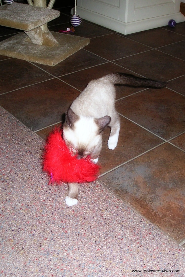 Baby Coco playing with his feather duster August 2006