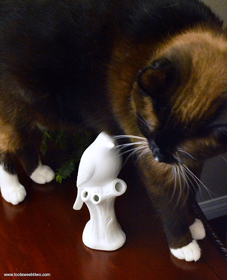 Coco hovers over the Bird Vase