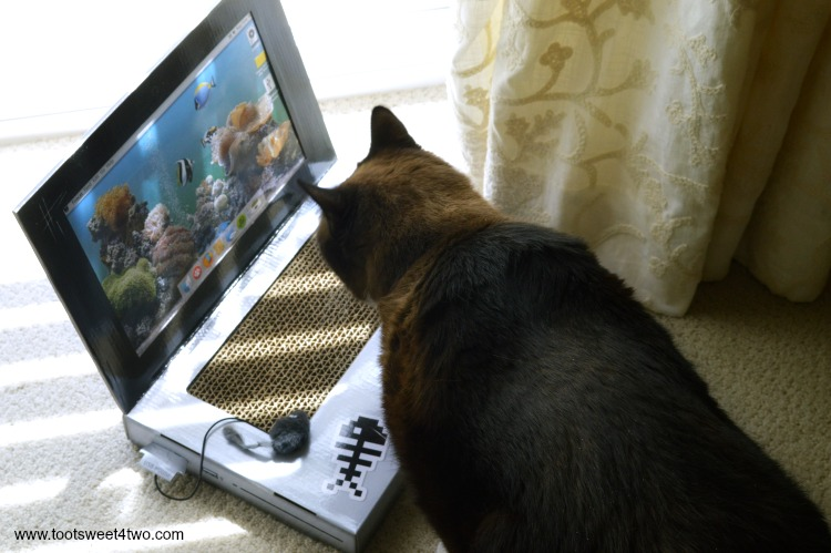 Coco notices the Laptop Cat Scratching Pad