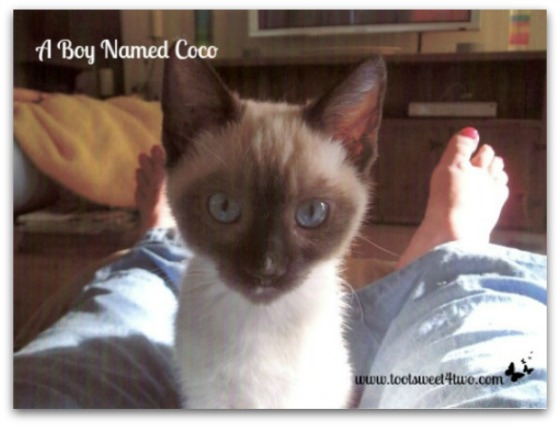Coco looking at me - A Boy Named Coco