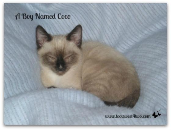 Sleepy baby Coco - A Boy Named Coco