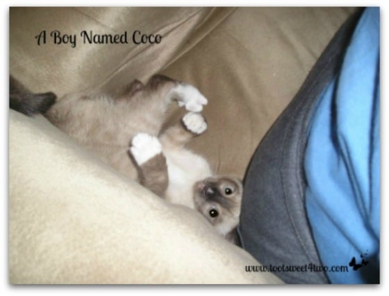 Upside down baby Coco - A Boy Named Coco