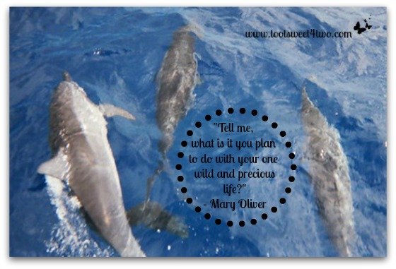Dolphins in Hawaii - Wild and Precious Life
