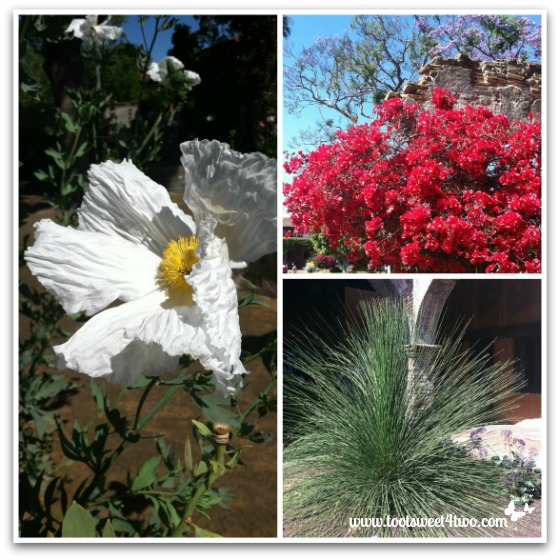 Plants and Flowers - Mission San Juan Capistrano