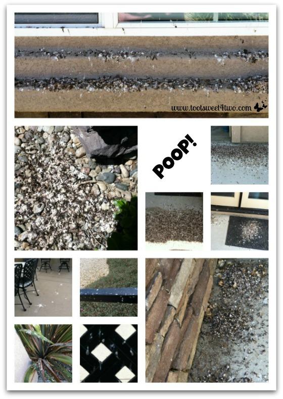 Swallow poop everywhere
