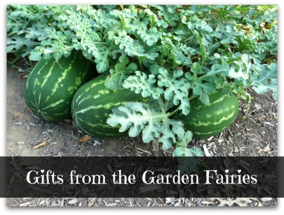 Watermelons - Gifts from the Garden Fairies