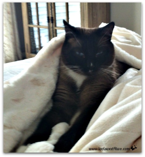 Coco purring and kneading soft blanket - The Squish Factor