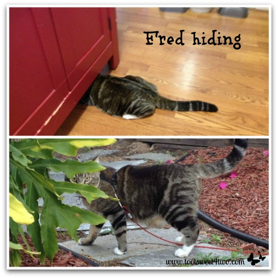 Fred hiding