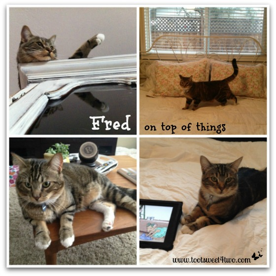 Fred on top of things