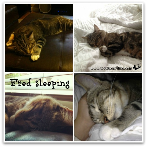 Fred sleeping