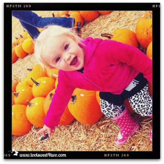 Princess Sweetie Pie at Bates Nut Farm 2012