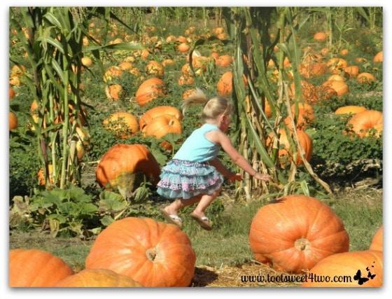 Princess P jumping over pumpkins