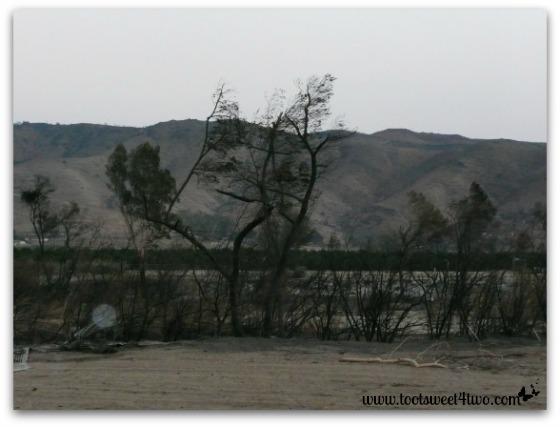 Tim Burton skeleton trees