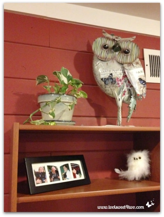 Owl on a bookshelf