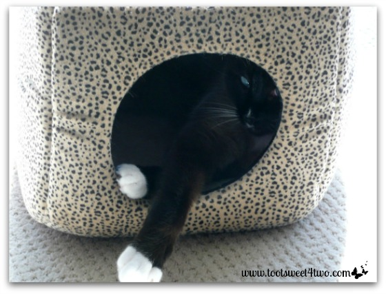 Coco in his kitty cubby