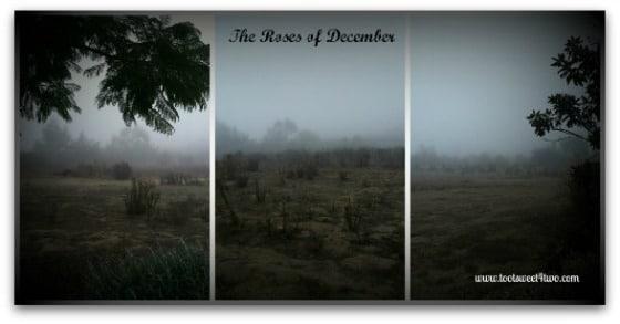Desolate landscape in the morning fog