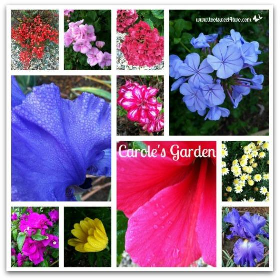 Carole's Garden - Good Photographs