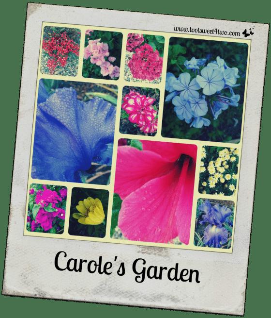 Carole's Garden Polaroid - Good Photographs