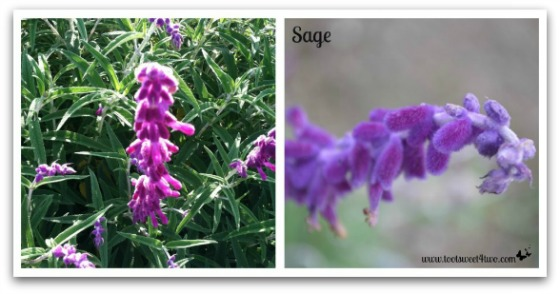Sage - Good Photographs