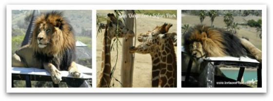 San Diego Zoo's Safari Park - 42 Things to do in San Diego