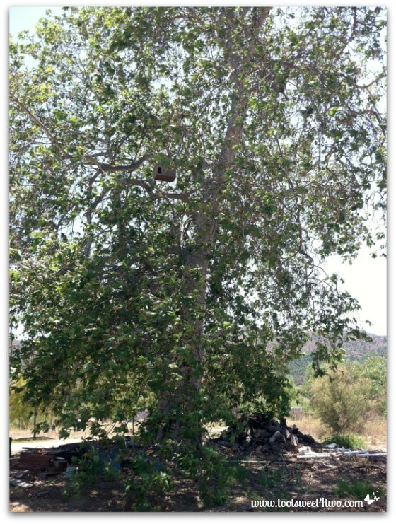 Owl Barn in the tree - By Way of the Dodo Bird
