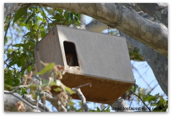 Owl in the Owl Barn - By Way of the Dodo Bird