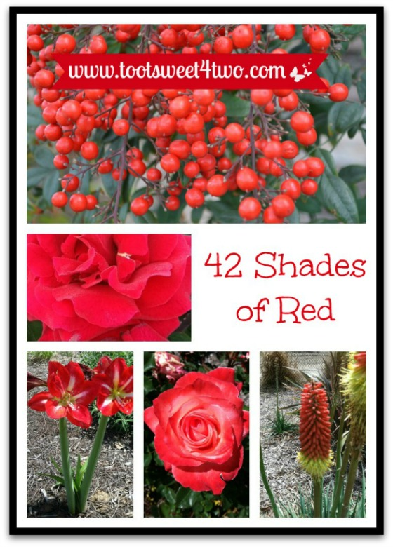 Red flowers in the garden - 42 Shades of Red