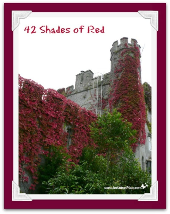 Red ivy-covered walls on Irish Castle - 42 Shades of Red