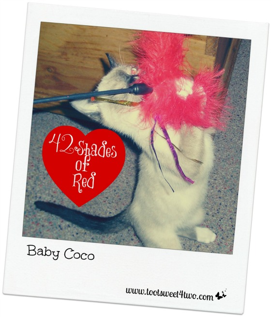 Baby Coco playing with a red feather duster