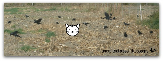 Dorothy with the crows in the field