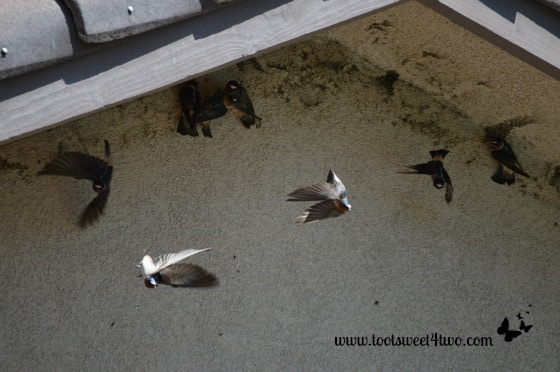 Swallows - touch down, turn around