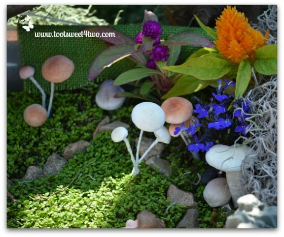 Fairy Garden with lots of Mushrooms
