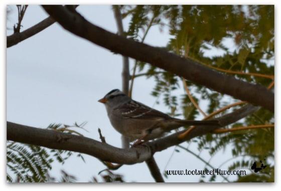 Unknown bird in my Jacaranda tree