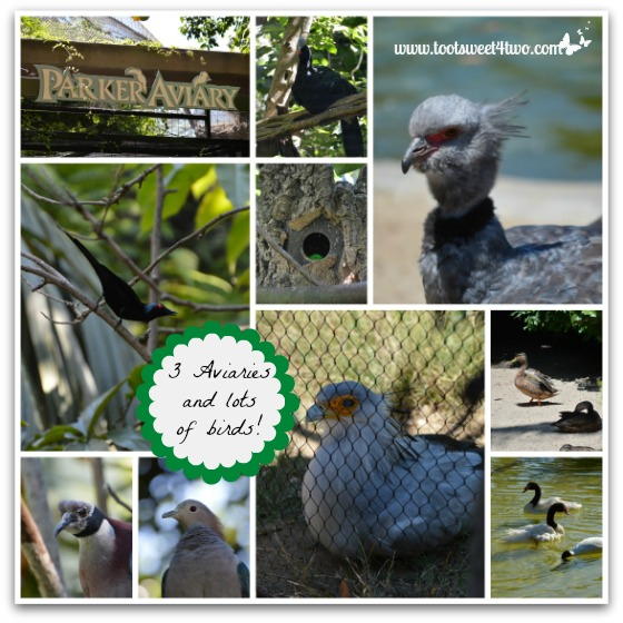 3 Aviaries at the San Diego Zoo