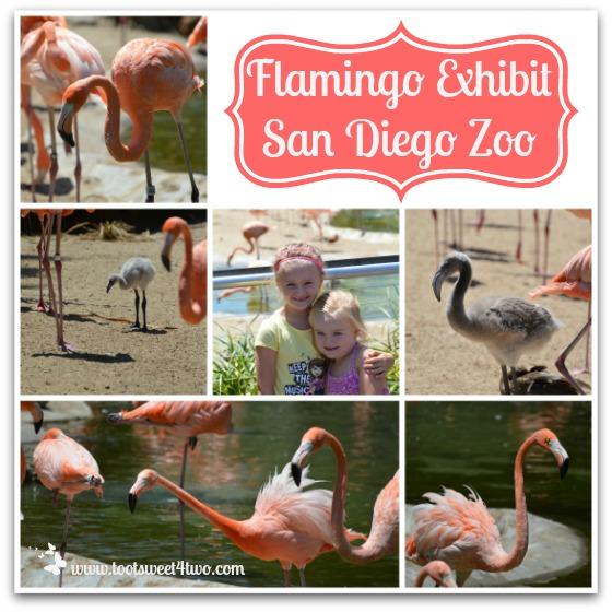 Flamingo exhibit at the San Diego Zoo