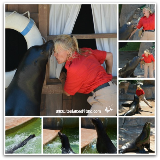 Sea Lion show at Camp Critters, San Diego Zoo