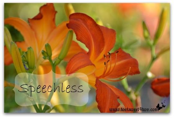 Speechless - orange lily