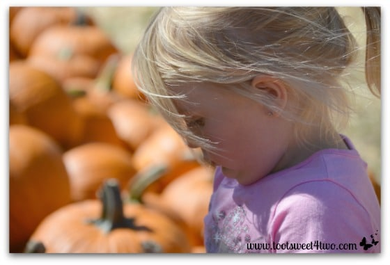 Contemplating pumpkin picking strategy