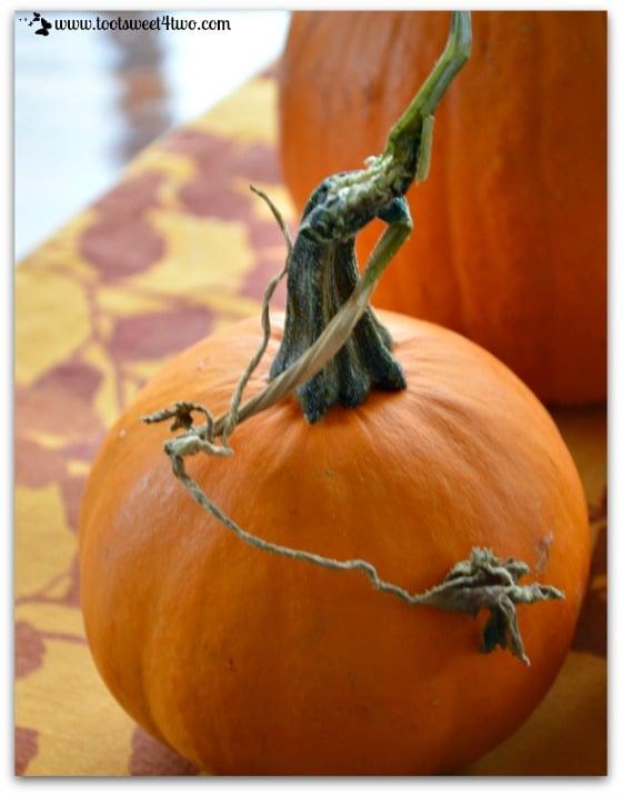 Little pumpkin with a vine