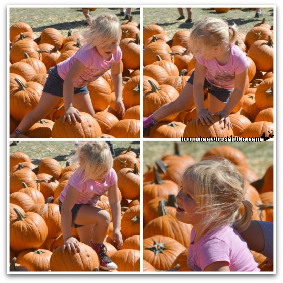 Princess Sweetie Pie climbing over pumpkins