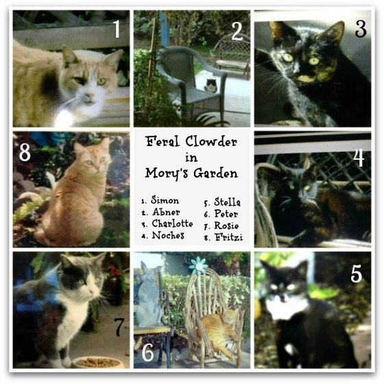 Clowder of feral cats in Mory's Garden