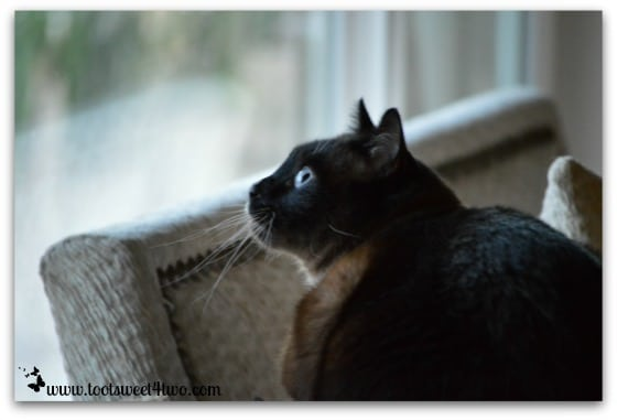 Coco watching the swallows