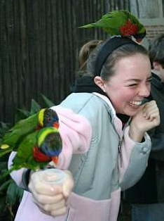 Erin and the lorikeets at the San Diego Zoo Safari Park