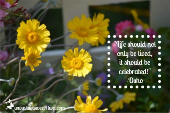 July 2013 Favorite Quote - Celebrate Life