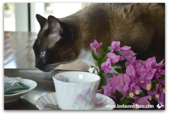 Coco checking out tea bags - Picture Perfect